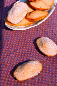 rose water grenadine madeleines