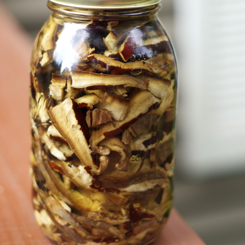 Reishi Mushroom Tinctures