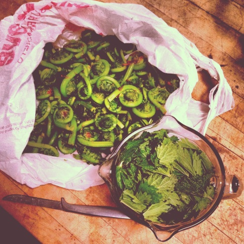 fiddleheads and nettles
