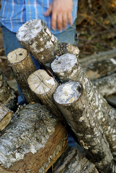 aging logs