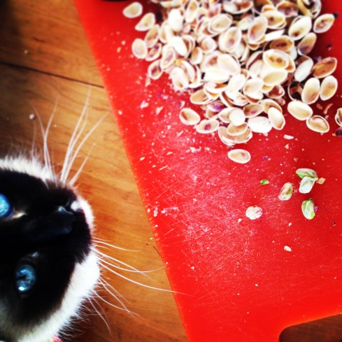 pistachio kitty