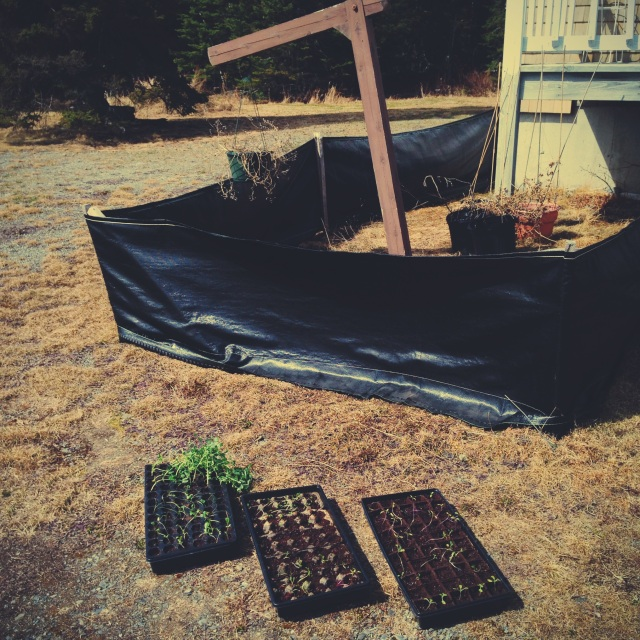 seedlings in the sun